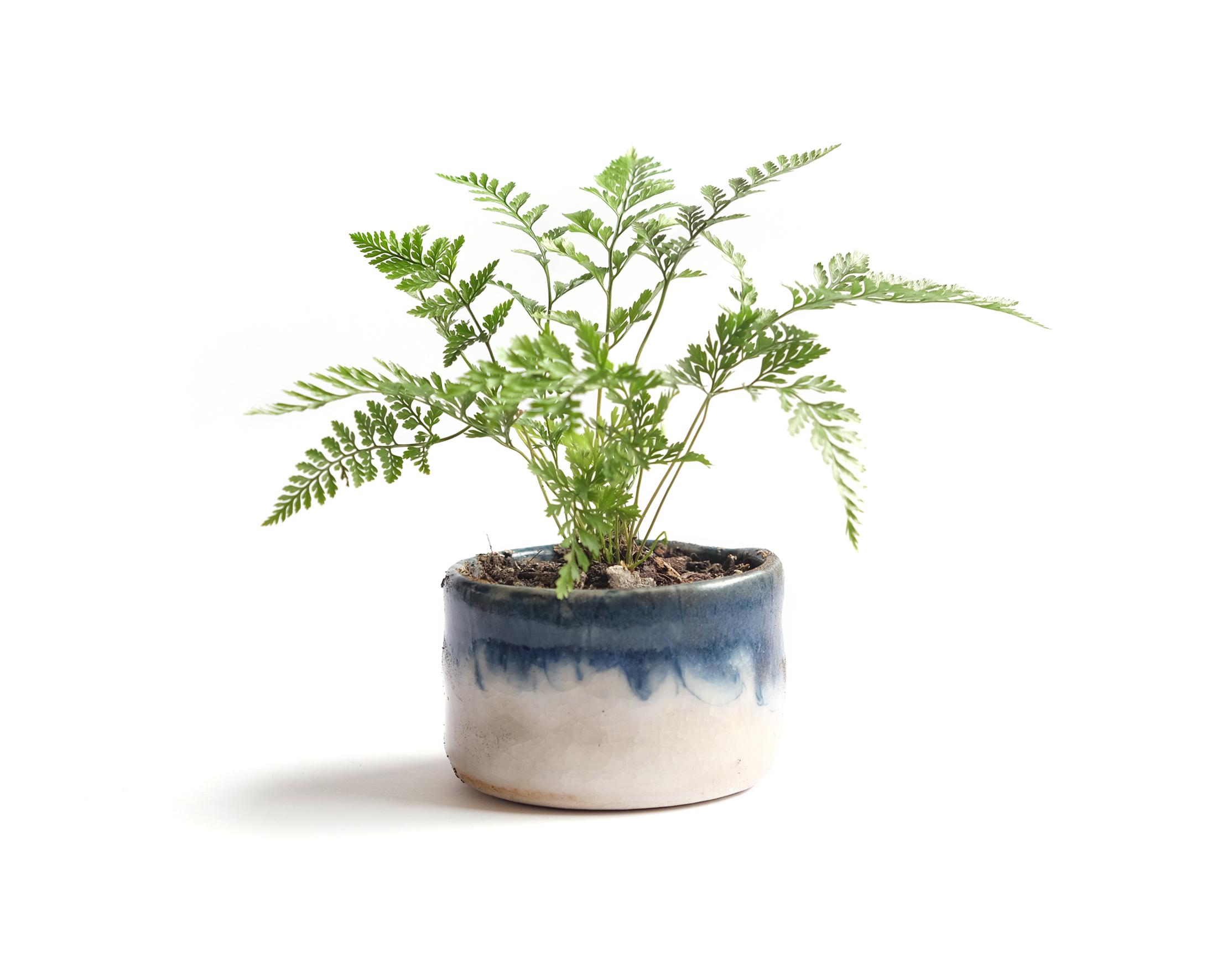 Ceramic Drip Pot